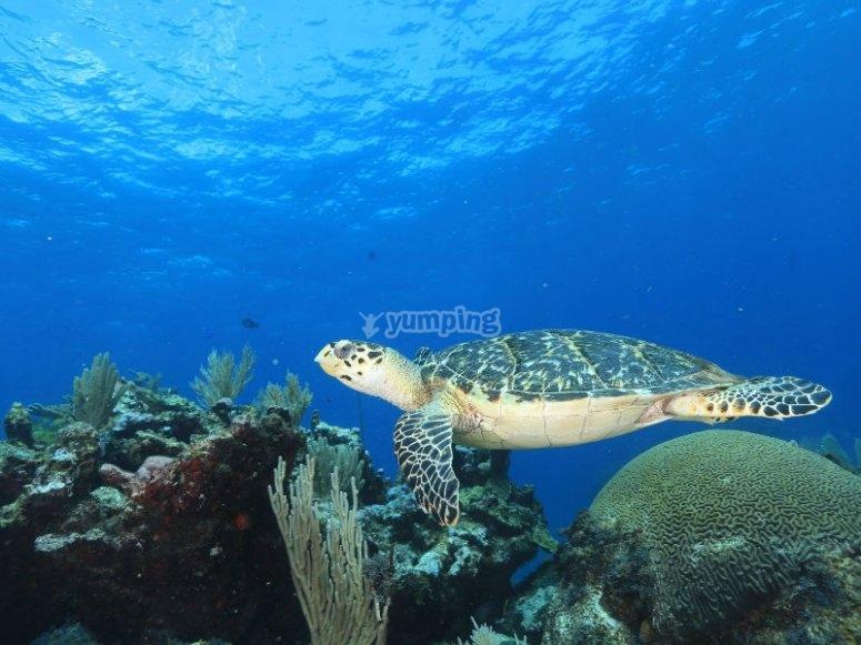 Fauna marina de Cancún