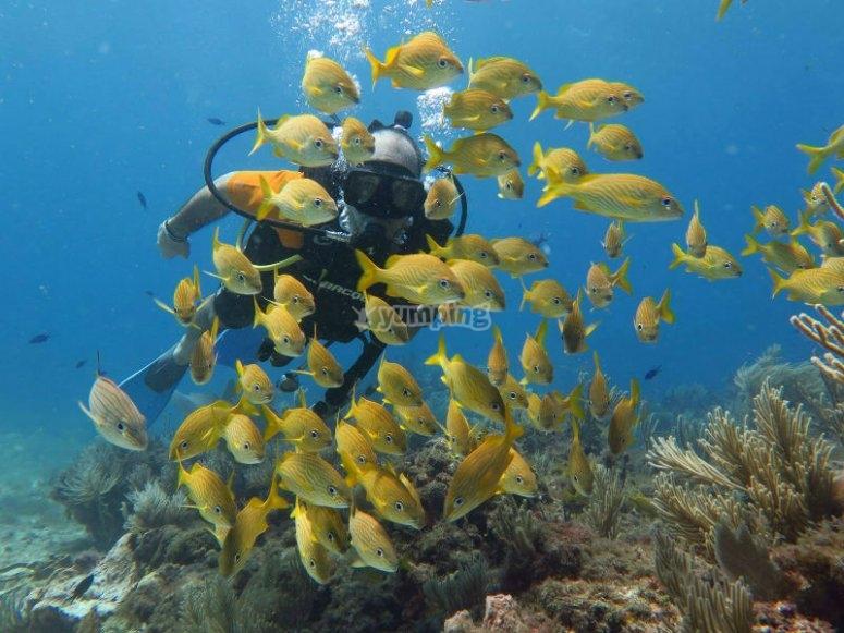 Increibles bancos de peces