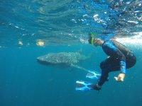Snorkel cerca del pez más grande del mundo