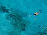 Snorkel acompañado de un tiburón ballena