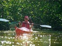 Kayaks en manglares