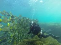 Diving in Oaxaca