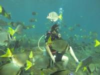 Low Cost Diving Adventures