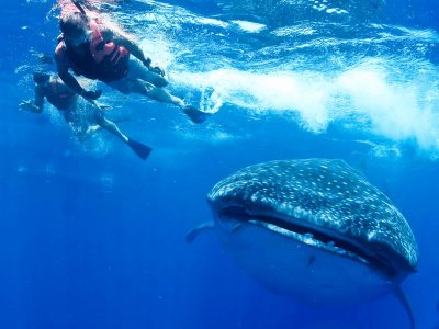 Swimming with whale shark Cancún 7h KIDS