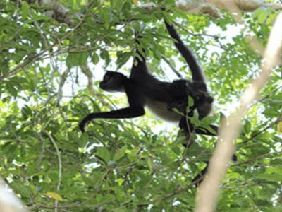 Spider monkey personalized tour Cobá and cave 9h