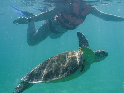 Private tour seaturtles Cancún 8h