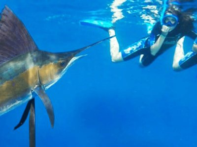 Private snorkel tour Sailfish in Cancún 6 hours