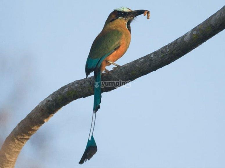 Captura de ave comiendo