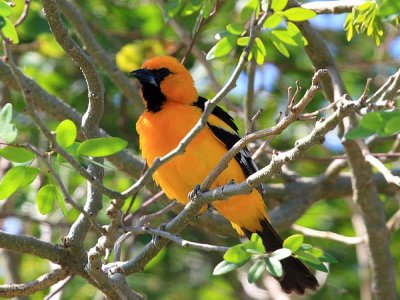 Private Tour Bird Watching Cancun 6 hours