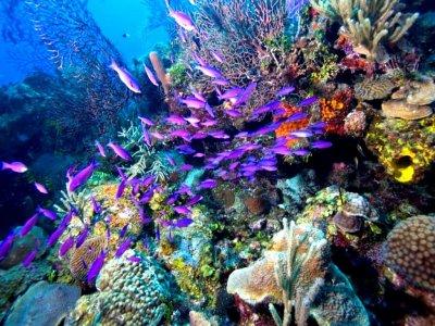 Tour privado snorkel Arrecife y Cenote Cancún 5h