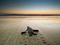 Liberación de tortuguitas marinas Pto Escondido