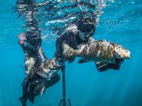 Underwater fishing for beginners Punta Mita 3 h