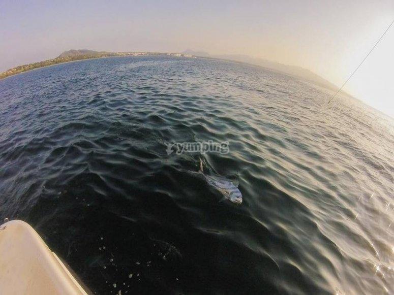 Pescas en Punta Mita