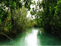 Explorando manglares en kayak