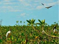 Avistamiento de aves en la reserva Sian Ka'an