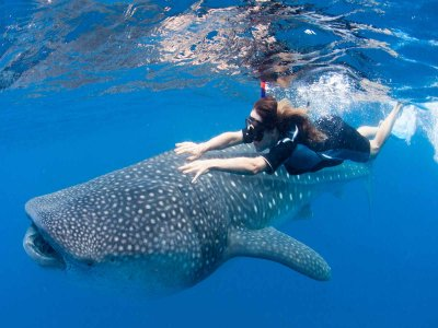 Swim with Whale Shark kids offer