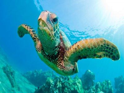 Visita a Sian Kaan y snorkel 12h