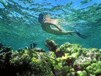 Explora el fondo del mar