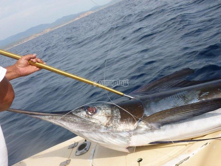 Pescando Marlin