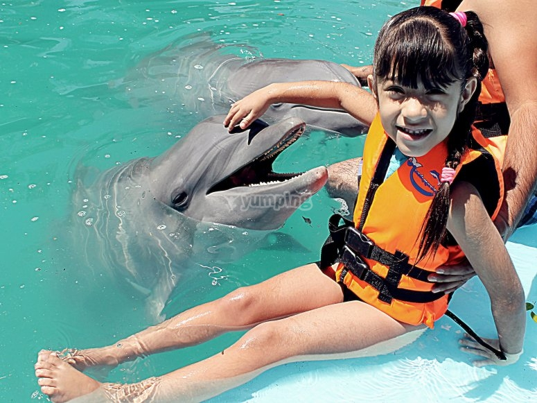 Interacting with dolphins