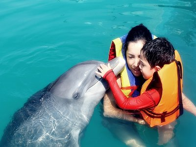 Swimming dolphins parents and babies Jalisco