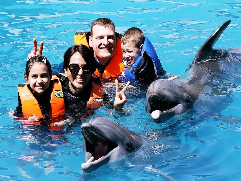 Live with dolphins
