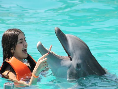 Swimming with dolphins birthday Guadalajara 40min