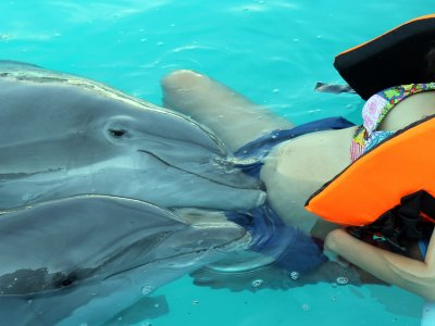 Swimming dolphins prenatal stimulation Jalisco
