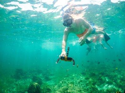 Snorkel en Tulum y Coba con trasnporte y comida