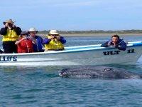 Tour ballenas