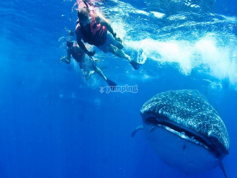 Diviertete con el tiburon