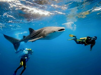Nado tiburón ballena Riviera Maya con comida Niños