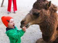 The little ones will live magical moments with the camels