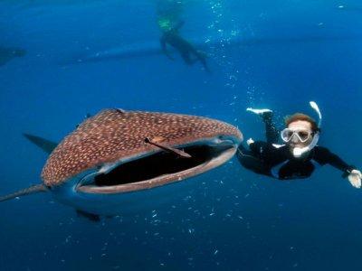Wild Canyon Nado con Tiburón Ballena