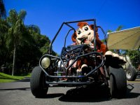 Our pet in buggy