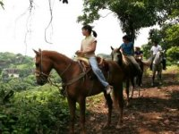 Guided horseback riding
