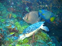 Snorkel tour 6:30 h and 3 areas in Cozumel