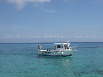 Nado con tiburón ballena en Playa del Carmen 9hrs