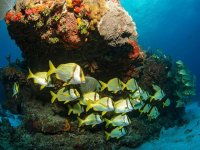 Diving course in Cozumel beach 4 hours