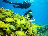 Buceo 2 inmersiones en playa Majahuitas 5.5 horas