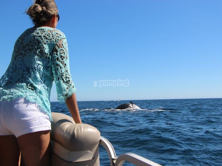 Aprecia las ballenas