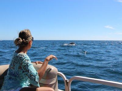 Ver Ballena Gris en Los Cabos 2 horas Niños