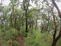 rutas entre bosques