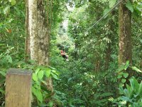 Tour the jungle in zipline