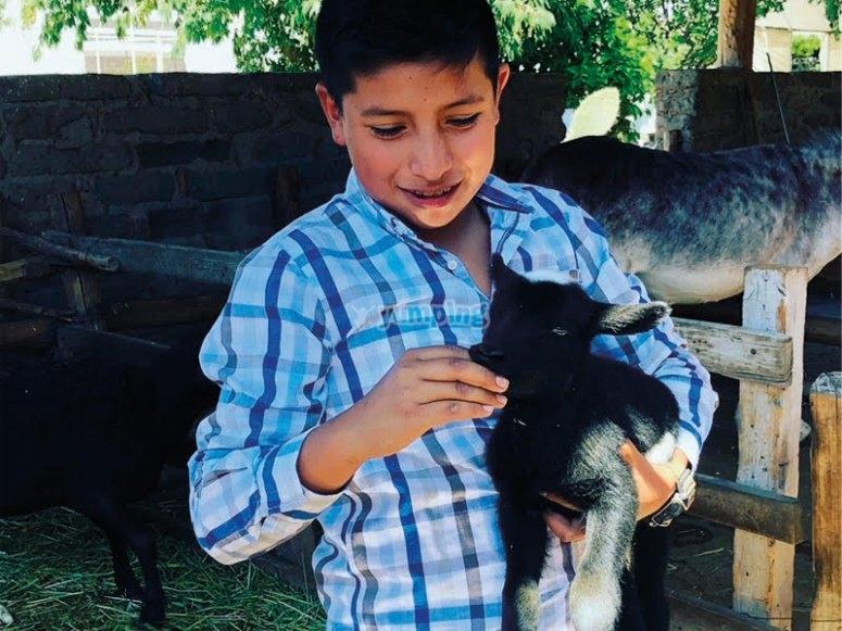 Interactúa con los animales de la granja