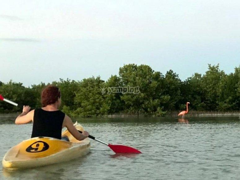 Diviertete en Kayaks