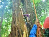 Climb through the tree