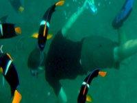 Snorkel bajo el mar