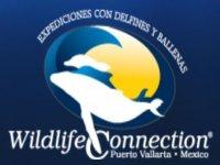 Wildlife Connection Nado con Delfines