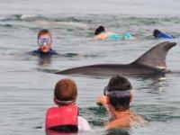 Interaccion con animales acuaticos